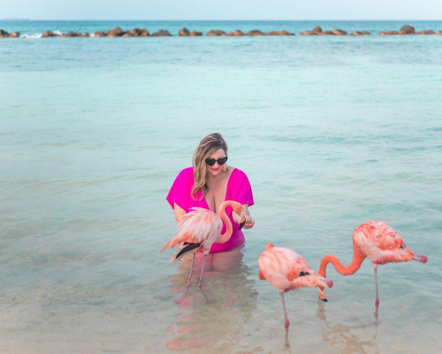 Feeding wild flamingos at Flamingo Island in Aruba