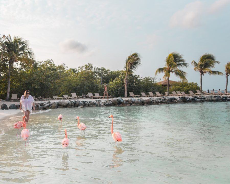 Meeting flamingos at Flamingo Beach in Aruba
