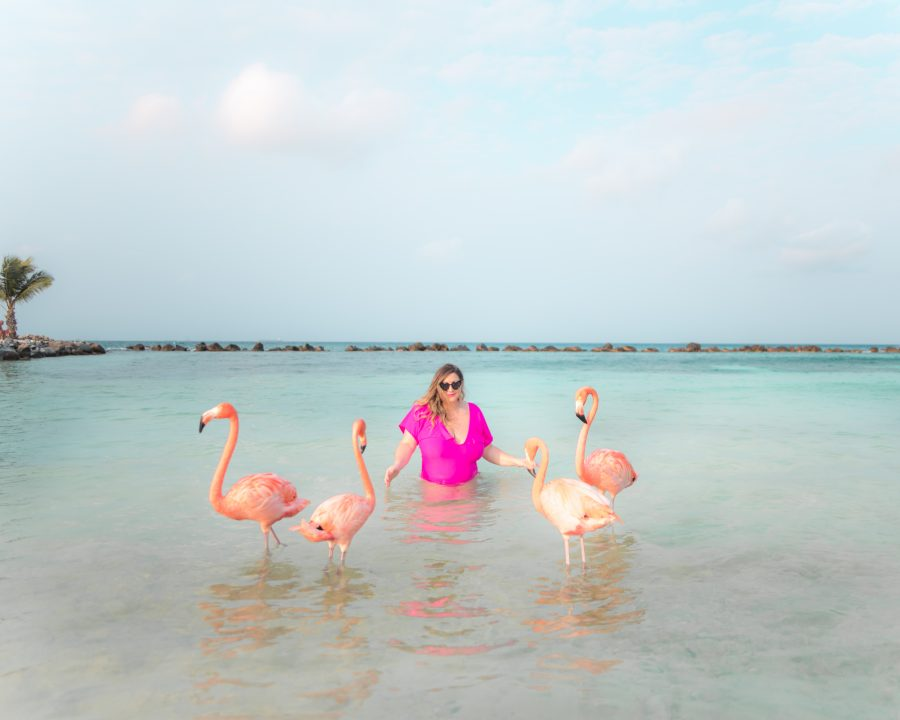 The ultimate guide on how to visit Flamingo Beach at Renaissance Island in Aruba