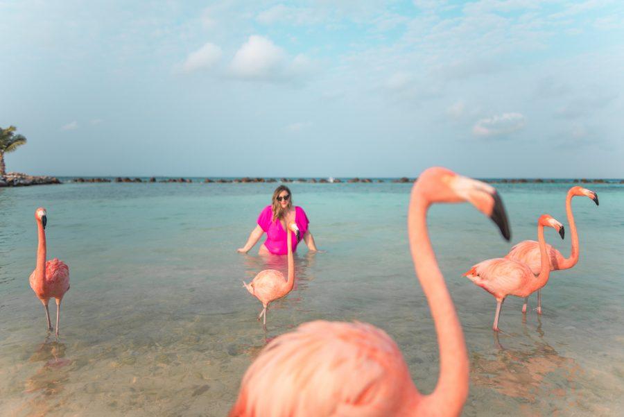 Swimming at Flamingo Beach in Aruba was a dream!