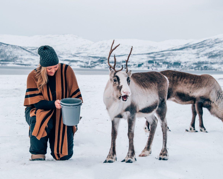 Sami culture and reindeer in Tromso, Norway