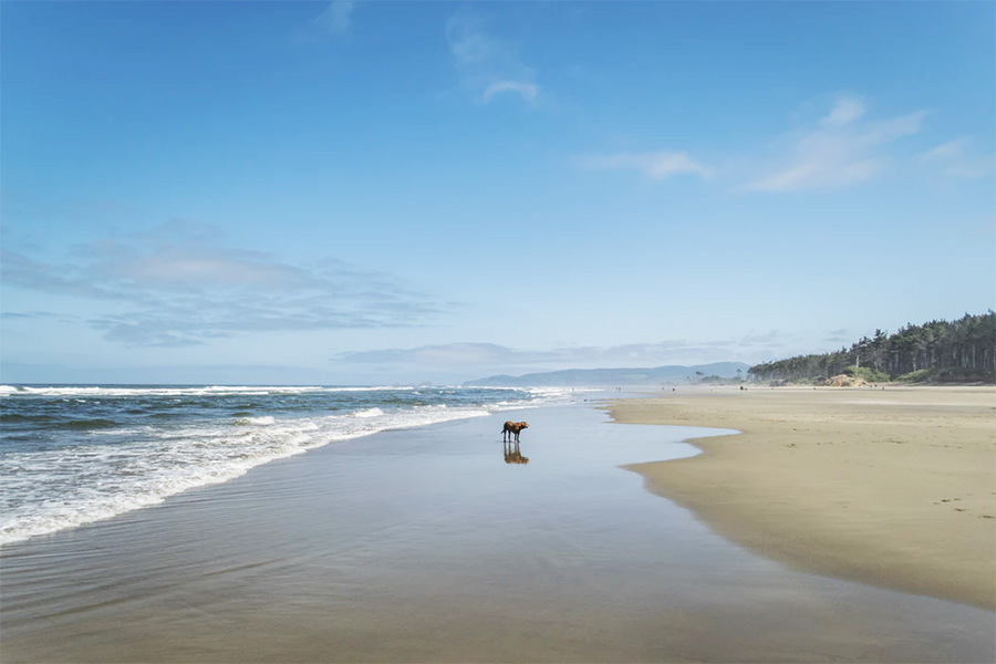 The Oregon Coast is a top destination in the USA in Spring