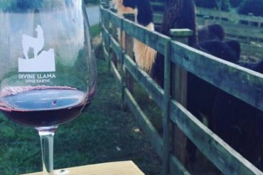 Head to wine country to check out either Raffildini vineyards or Divine Llama Vineyards. I've heard you can trek through the countryside with a cuddly llama at the Divine Llama Vineyards!