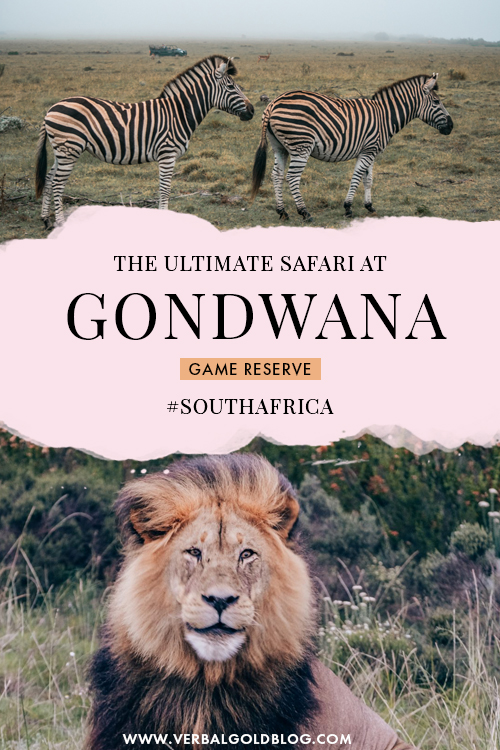 The Ultimate Safari at Gondwana Game Reserve in South Africa